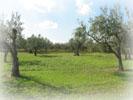 自社農園2